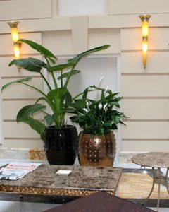 Növénydíszítés szállodai aranyszínű kerámia kaspókban
