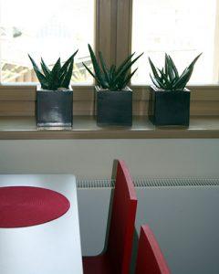 Aloe Vera növénykék zöld kubus kaspókban