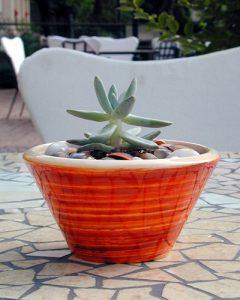 Növénydekoráció - mini pozsgásbeültetés