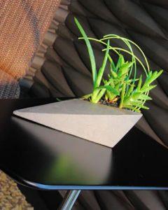 Kis design kaspóban pozsgás növények