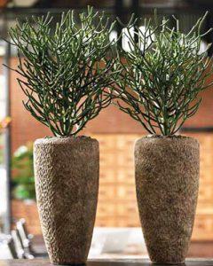 Design növénykaspók beültetéssel