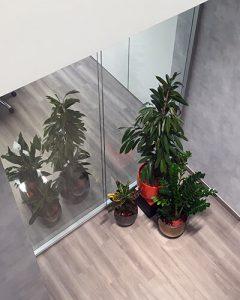 Növénydekoráció - növénycsoport design kaspóban