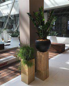 Növénydekoráció modern irodaházban fa talpakon
