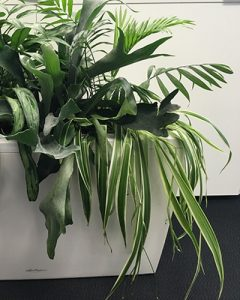 Carraro virágláda vegyes növény beültetéssel