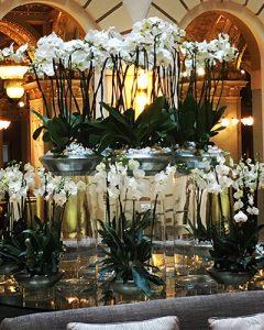 Cserepes orchideákból készült orchidea kert lobbyasztalon