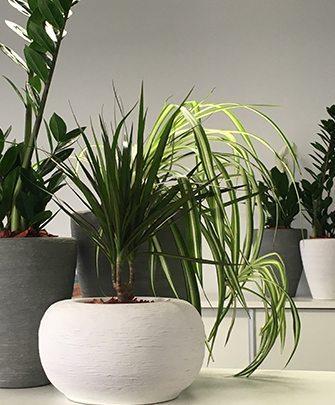 Vegyes növénybeültetés kerámia kaspóban