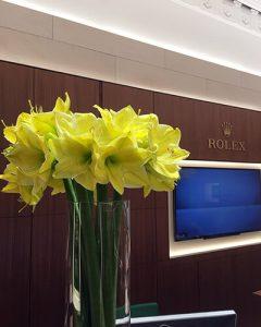 Rolex shop sárga amaryllis virágdekoráció