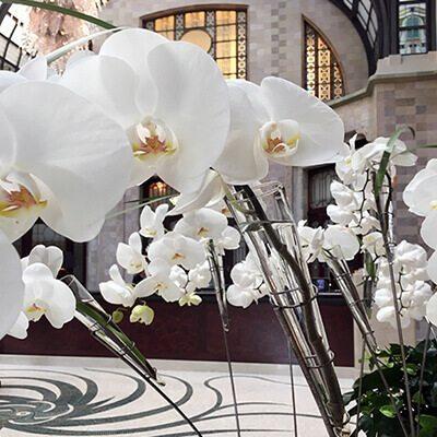 Hoteldekoráció fehér orchideákkal Four Seasons Hotel