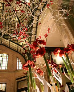 Amaryllis and butterflies at Valentine's Day at Four Seasons