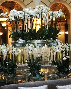 Boscolo orchids decoration - orchid garden on lobby table