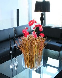 Red flamingo flowers on branches in glass cube