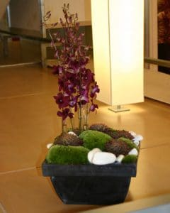 Burgundy orchids with moth and pebbles