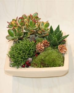 Flat decoration with succulents