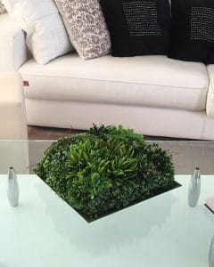 Succulent composition in square plate in office.