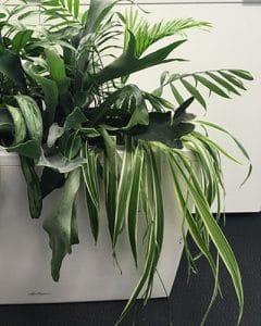 Carraro plant box with mixed plants