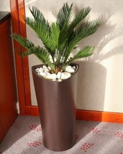 Cycas plant decoration in acryl pots