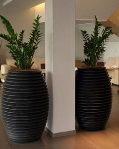 Plant composition with zamioculcas