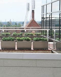 Office roof with juniperus