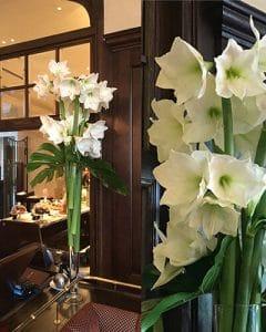 White amaryllis bouquets on restaurant service station