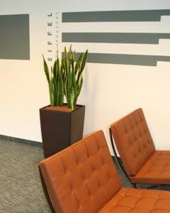 Office building sansevieria plants