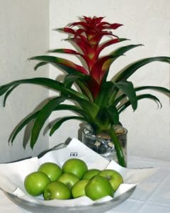 Bromelia with green apples