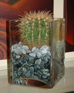 Plant decoration with cactus and pebbles