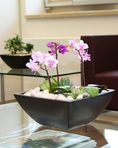 Mini orchid composition with succulents in ceramic bowl
