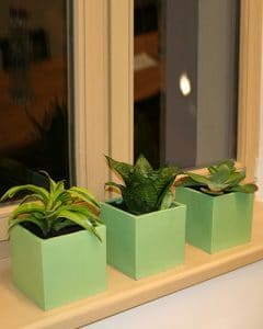 Plant decoration with succulent plants in green ceramic pots