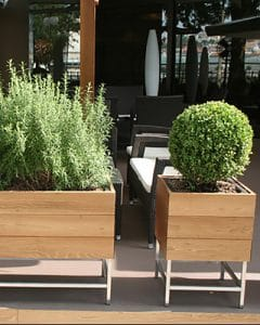 Terrace decoration with lavender and boxed hedges