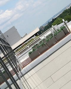 Juniperus Carraro plant boxes on office rooftop