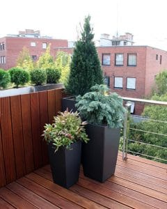 Evergreens on upstairs terrace