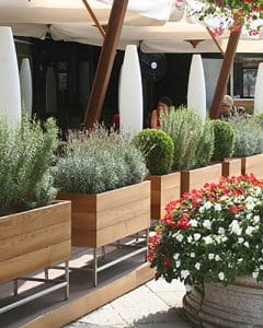 Terrace decoration with spices in plant boxes