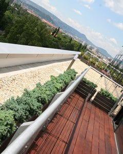Terrace decoration with juniperus