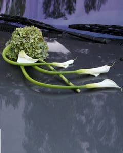 White callas on wedding car
