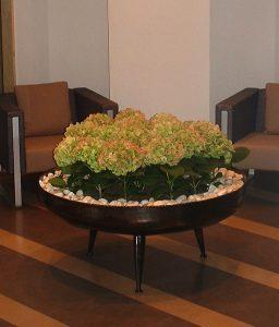 Zöld cserepes hortenzia csoportosan beültetve