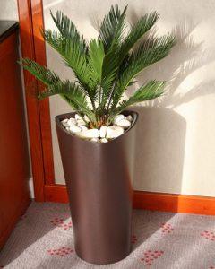 Cycas növénydekoráció műanyag kaspóban, kaviccsal