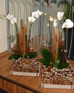 Bürök orchideatálak phalaenopsis orchideával beültetve