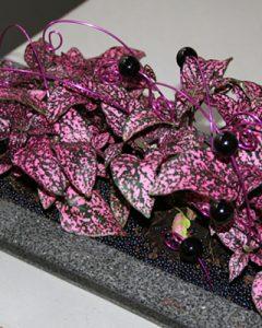 Színes levelű mini növénybeültetés