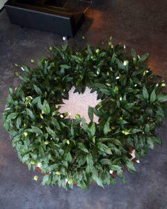 Körkörösen beültetett spathiphyllumok óriás kaspóban