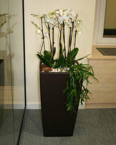 Orchidea pozsgásokkal - virágzó beültetés