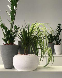 Irodai szekrények tetején vegyes cserepes növénybeültetések