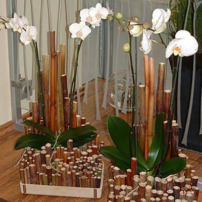 Orchidea tálak bürök díszítéssel
