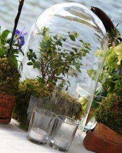 Üvegbúra alatt bonsai fa - modern lakásdekoráció