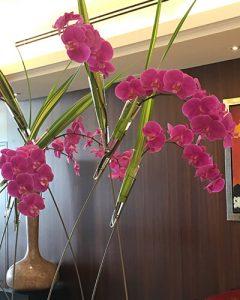 Pink orchideák lobby bejáratban állványon