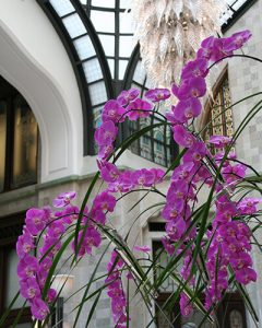 Gresham Palota lobbyjában orchidea díszítés