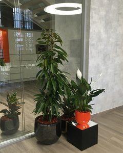 Növénydekoráció vegyes növénycsoport beültetéssel
