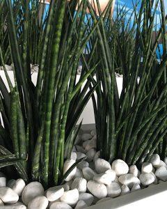 Növénydíszítés hosszú virágládákban